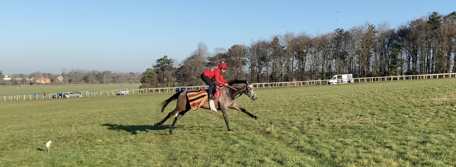 Warren Hill Grass Canter Opens at last…